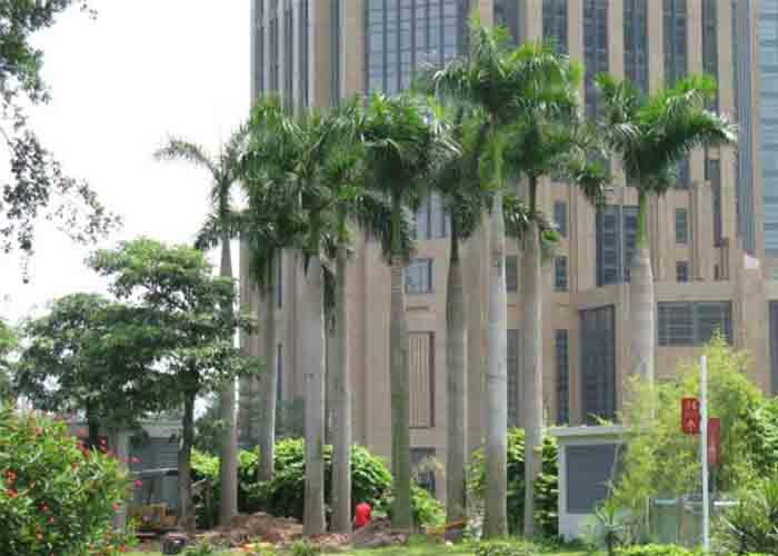 越靠近热带地区单位面积内植物越